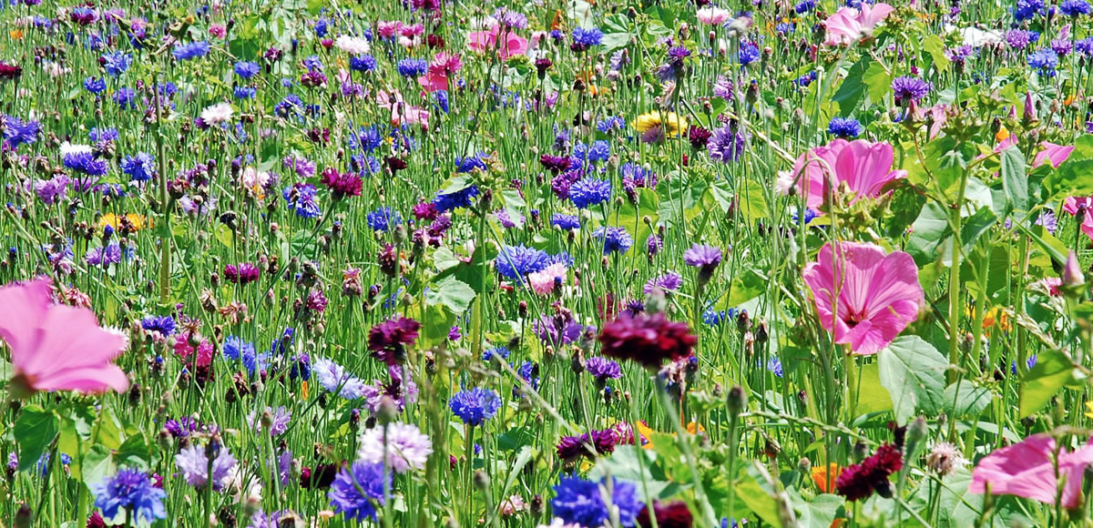 Wildflowers Planting