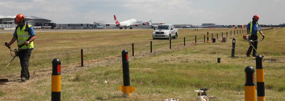 Strimming grass adjacent to Heathrow runway