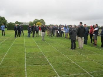 Endophytic Grass
