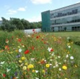 Office Wildflower Planting